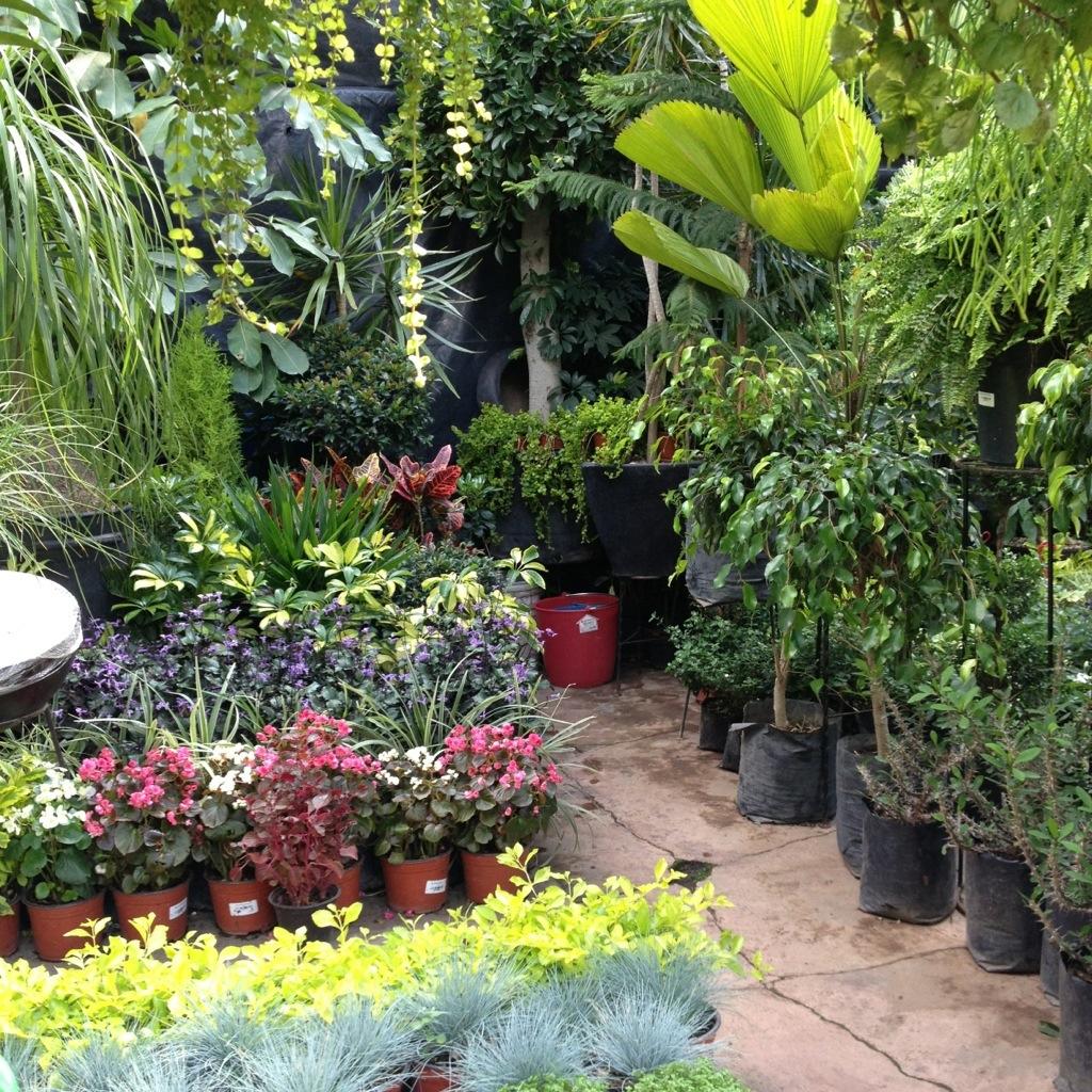 D nde comprar y qu comprar plantas y flores decoraci n for Viveros y plantas