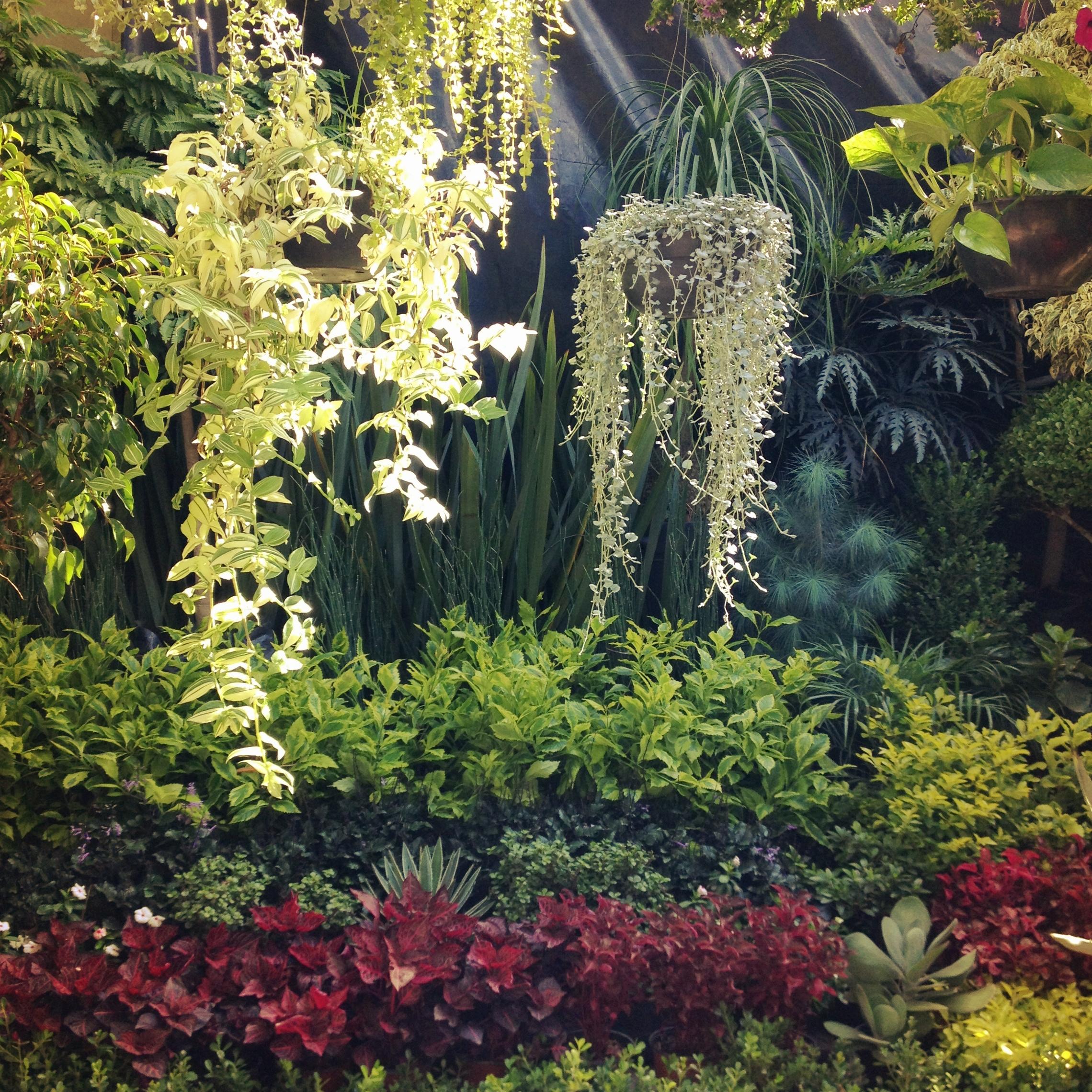 D nde comprar y qu comprar plantas y flores decoraci n for Vivero plantas exoticas